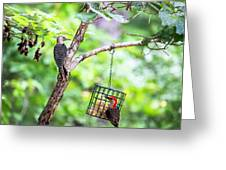 Red-bellied Woodpecker 2016 14 Greeting Card