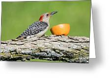 Red-bellied Woodpecker At The Feeder Greeting Card