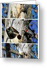 Red Bellied Woodpecker Harassed By A Starling Greeting Card