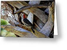 Red-bellied Woodpecker Hides On A Cabbage Palm Greeting Card