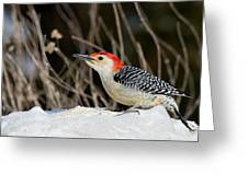 Red-bellied Woodpecker In The Snow Greeting Card