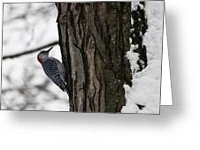 Red Bellied Woodpecker No 1 Greeting Card
