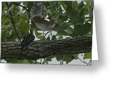 Red-bellied Woodpeckers Greeting Card