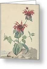 Red Bergamot In A Landscape, Aert Schouman Surroundings Of, C. 1750 - C. 1775 Greeting Card