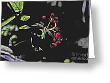 Red Berries And Foliage Greeting Card