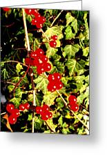 Red Berries And Ivy Greeting Card
