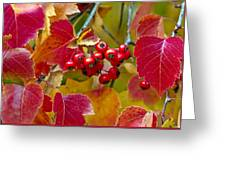 Red Berries Fall Colors Greeting Card