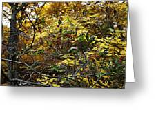 Red Berries In Fall Folliage Greeting Card
