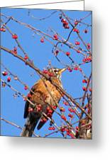 Red Berry Robin Greeting Card