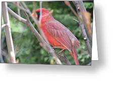 Red Bird In The Woods-2 Greeting Card