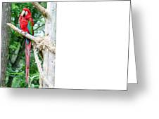 Red Bird And Pink Flowers Greeting Card