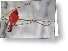 Red Bird Of Winter Greeting Card