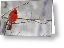 Red Bird Of Winter Greeting Card by Jeff Kolker
