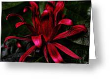Red Bloom Greeting Card