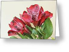 Red Blooms Poster Art Greeting Card
