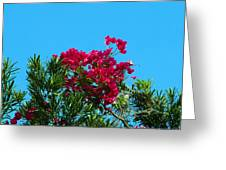 Red Bougainvillea Glabra Vine Greeting Card