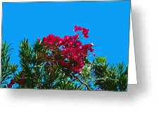 Red Bougainvillea Glabra Vine In Juniperus Virginiana Tree In Co Greeting Card