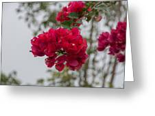 red bougainvillea in Laguna Guerrero Greeting Card