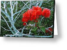 Red Bougainvillea Thorns Greeting Card