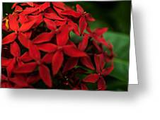 Red Bouquet 7 Greeting Card