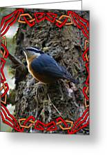 Red Breasted Nuthatch 2 Greeting Card