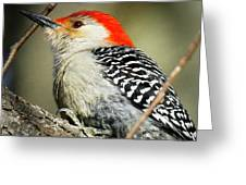 Red-breasted Woodpecker 1 Greeting Card