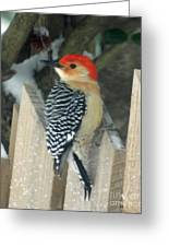 Red Breasted Woodpecker On Fence Greeting Card