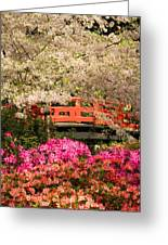 Red Bridge And Blossoms Greeting Card