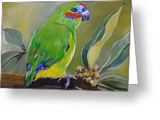 Red Browed Fig Parrot  Greeting Card