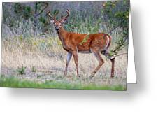 Red Bucks 1 Greeting Card by Antonio Romero