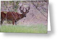 Red Bucks 2 Greeting Card by Antonio Romero