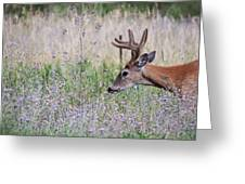Red Bucks 4 Greeting Card by Antonio Romero