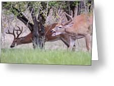 Red Bucks 5 Greeting Card
