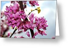 Red Bud 2011-1 Greeting Card