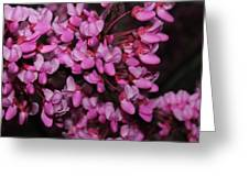 Red Bud 2011-4 Greeting Card