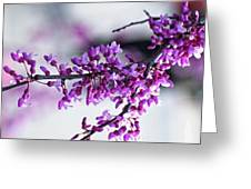 Red Bud Branch Greeting Card