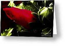 Red Bud On Green Background Greeting Card