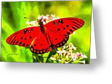 Red Butterfly Greeting Card