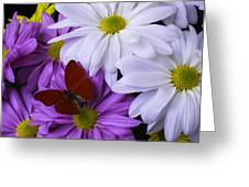 Red Butterfly On Assorted Mums Greeting Card