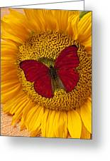 Red Butterfly On Sunflower Greeting Card