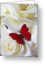 Red Butterfly On White Roses Greeting Card
