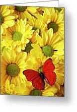 Red Butterfly On Yellow Mums Greeting Card