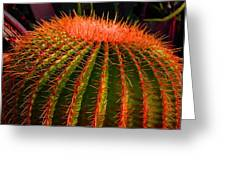 Red Cactus Greeting Card
