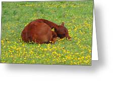 Red Calf In The Buttercup Meadow Greeting Card