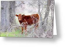 Red Calf In Winter Brush Greeting Card