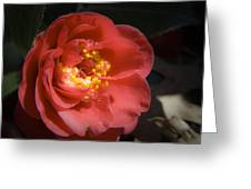 Red Camellia Bloom Greeting Card