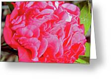 Red Camellia Greeting Card