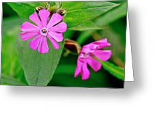 Red Campion - Fairy Flower. Greeting Card