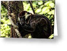 Red-capped Mangabey Greeting Card
