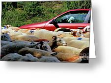 Red Car Blocked By A Flock Of Sheep Greeting Card by Sami Sarkis
